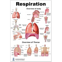 Respiration Large Poster