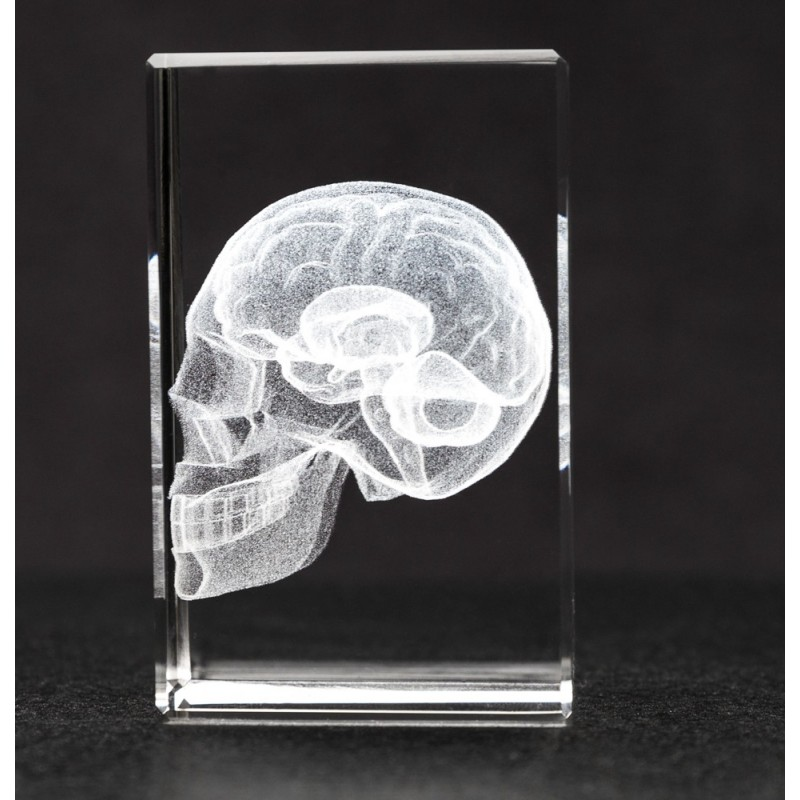 Skull and Brain Crystal Art side view