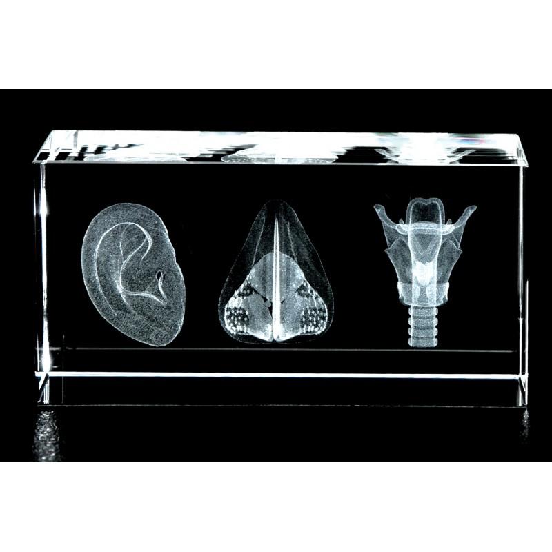 ENT Three Image Crystal Art