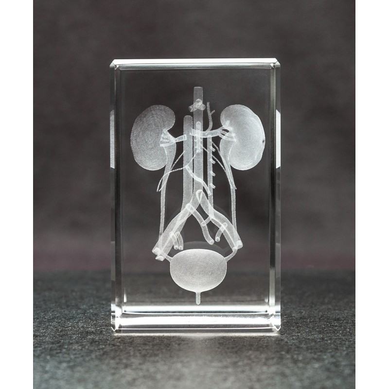 Kidney and Bladder Crystal Art front view