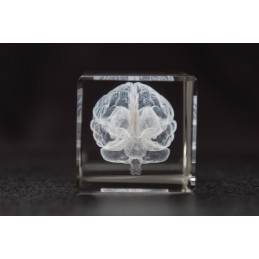 Brain Crystal 1lb side view