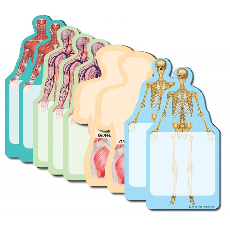 Anatomy Body Stick Notes Collection