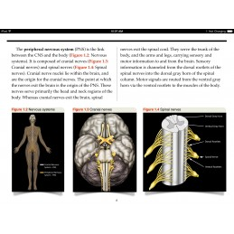 Cranial Nerves iBook Figures