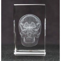 Skull and Brain Crystal Art front view