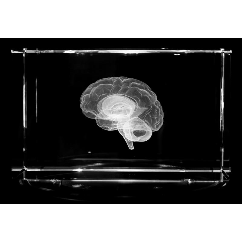 Brain Extra Large Crystal Art
