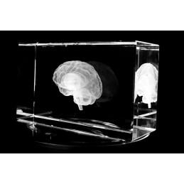 Brain Extra Large Crystal Art diagonal view
