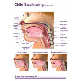 Child Swallowing Anatomical Chart front