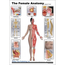 Female Anatomical Chart front