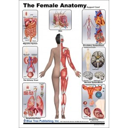 Female Anatomical Chart back