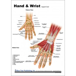 Hand and Wrist Anatomical Chart front