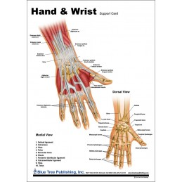 Hand and Wrist Anatomical Chart back
