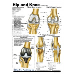 Hip and Knee Anatomical Chart back