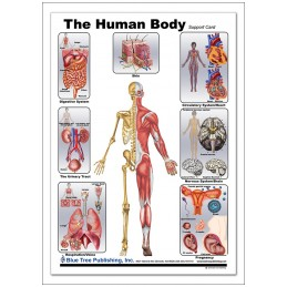 Human Body Anatomical Chart back