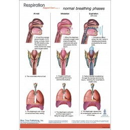 Respiration Anatomical Chart back