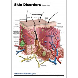 Skin and Skin Disorders Anatomical Chart front