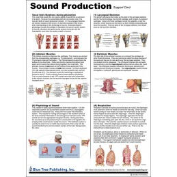 Sound Production Anatomical Chart