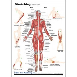 Stretching Anatomical Chart