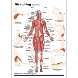 Stretching Anatomical Chart back
