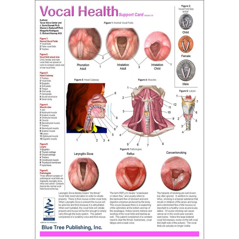 Vocal Health Anatomical Chart front