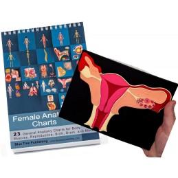 Female Anatomy Flip Charts with Uterus Model