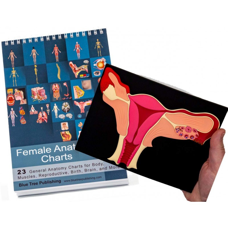 Female Anatomy Flip Charts with Uterus Model