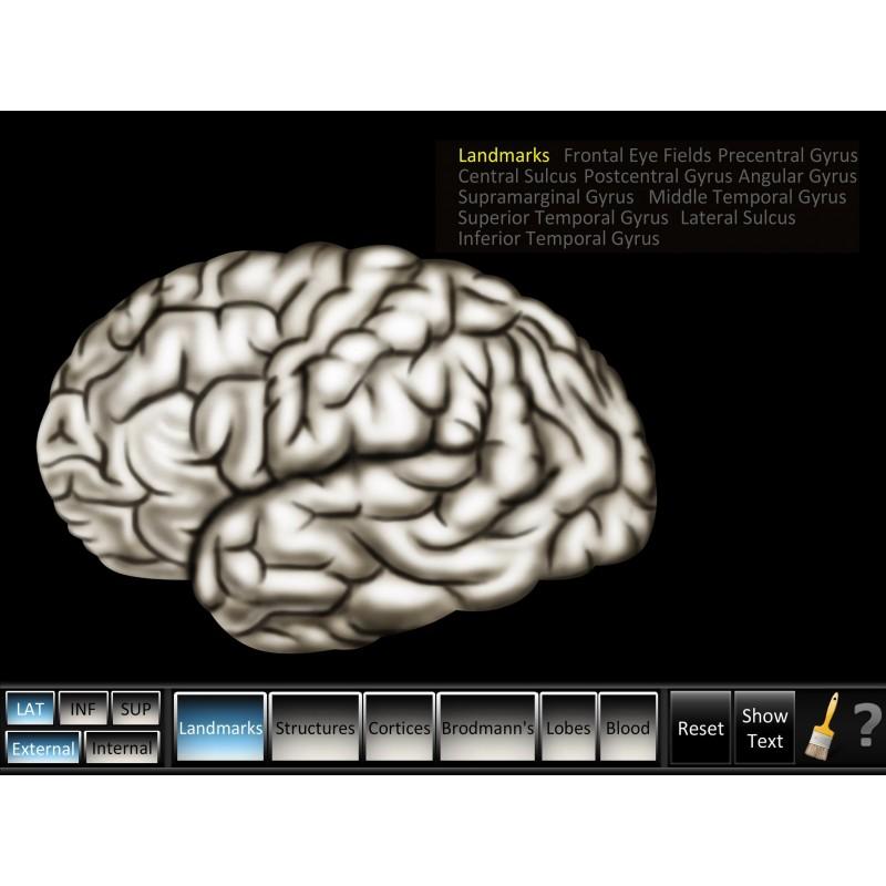 Cerebrum ID Mobile App landmarks lateral view