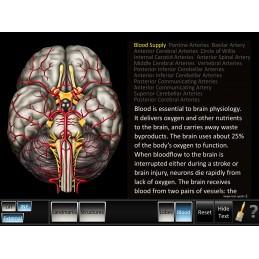 Cerebrum ID Mobile App blood inferior view