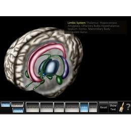 Cerebrum ID Mobile App limbic view