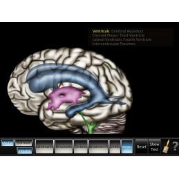 Cerebrum ID Mobile App ventricals view