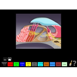 Hearing Anatomy Health Fair Mobile App hair cell animation