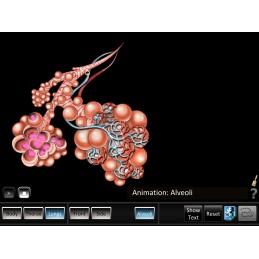 Respiration ID Mobile App alveoli animation