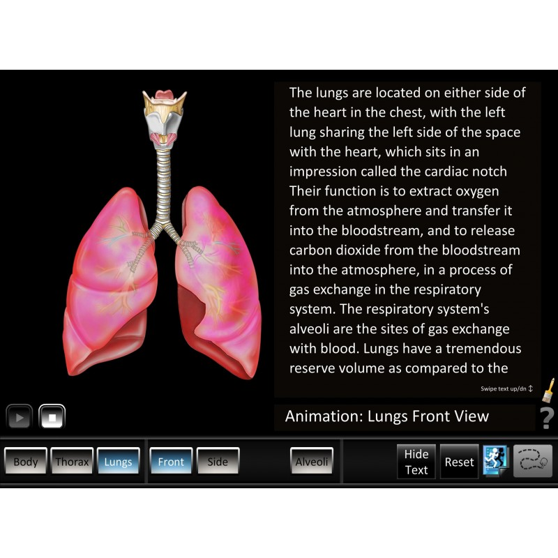 Respiration ID Mobile App lungs animation