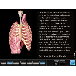 Respiration ID Mobile App back muscles id
