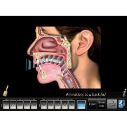 Speech Articulation - Front/Back Vowels Mobile App wave animation
