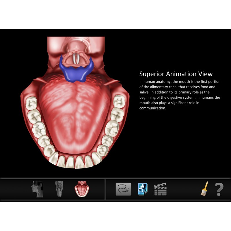 Swallow ID Mobile App open mouth structure id