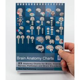 Brain Anatomy Flip Charts