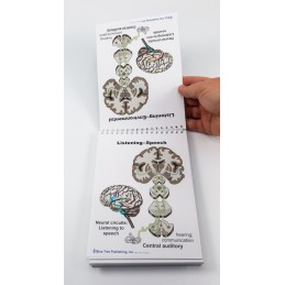 Brain Anatomy Flip Charts example content