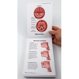 Swallowing Anatomy Flip Charts example of contents