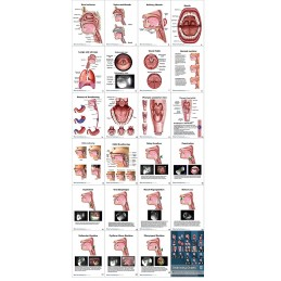 Swallowing Anatomy Flip Charts all charts view