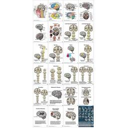 Brain Anatomy Flip Charts all charts view