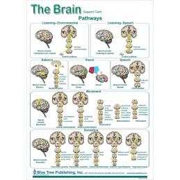 Brain and Brain Disorders Anatomical Chart brain card 2, side 1