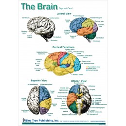 Brain and Brain Disorders Anatomical Chart brain card 1, side 1