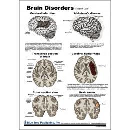 Brain and Brain Disorders Anatomical Chart disorders chart back