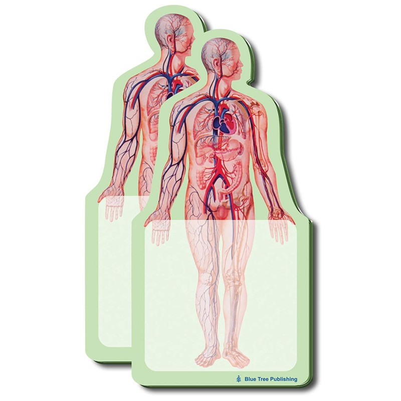 Body Stick Note 2 pack
