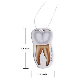 Tooth size