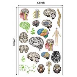 Brain Tattoo size
