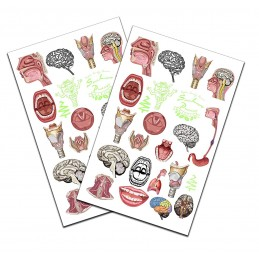 SLP Tattoo 2 pack