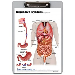 Digestive System Dry Erase Clipboard front
