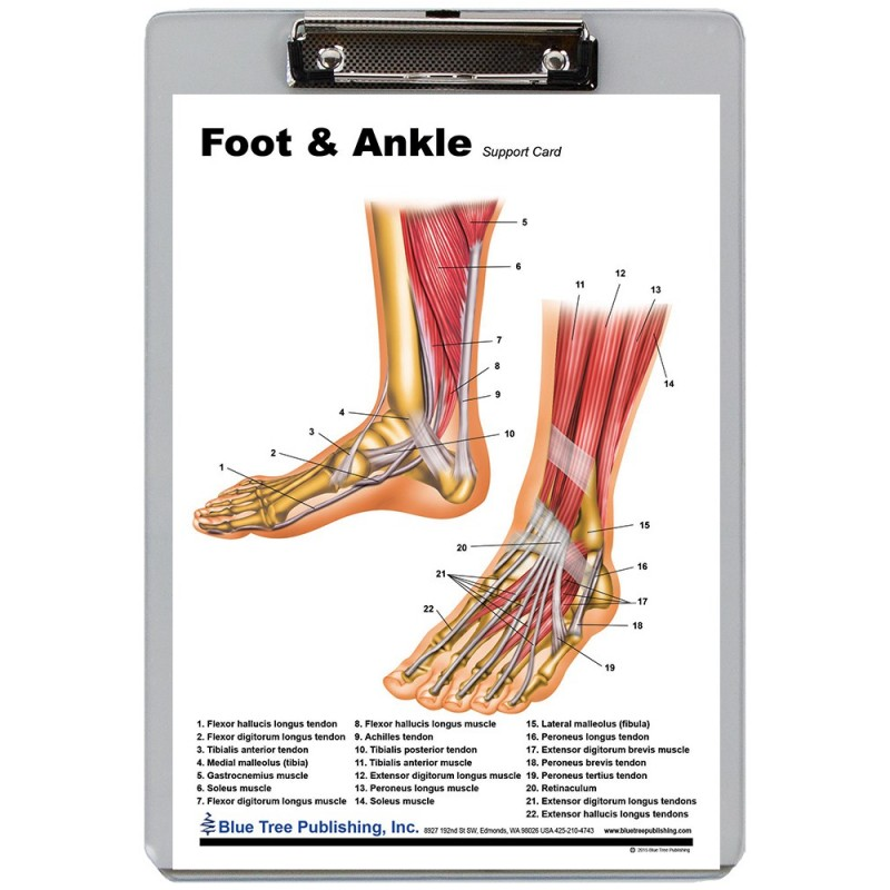 Foot and Ankle Dry Erase Clipboard front