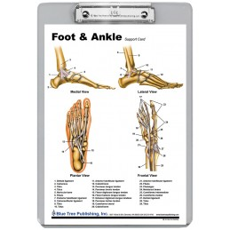 Foot and Ankle Dry Erase Clipboard back